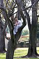 kellan lutz climbs tree reads book 18