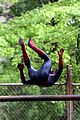 andrew garfield emma stone spider man 2 night shoot stunts 16