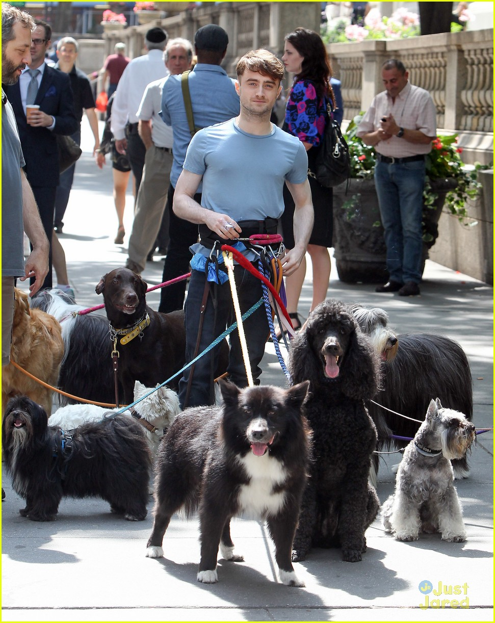 daniel radcliffe dog walking