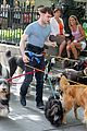 daniel radcliffe dog walker trainwreck nyc set 05