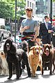 daniel radcliffe dog walker trainwreck nyc set 11