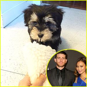 Jamie Chung & Bryan Greenberg Adopt The Cutest Dog Ever & Name Him Ewok