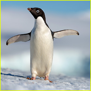 Steve The Penguin Is The Clear Star of Disneynature's 'Penguins' - Watch The Trailer!