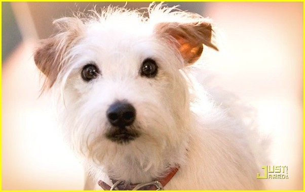 emma roberts hotel dogs 02