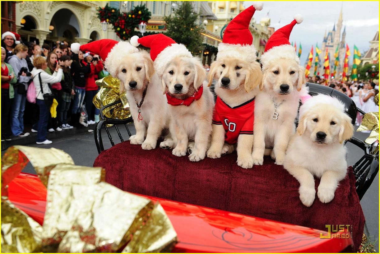 Santa Buddies Pictures With Santa Buddies | Steve