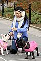 Vanessa-dogs vanessa hudgens dog walking 04