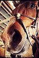 Ian-horses ian somerhalder nikki reed ride a horse t